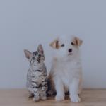Peli di animale in auto e in casa: come rimuoverli?